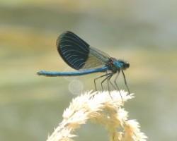 Vážka vo Vrakuni